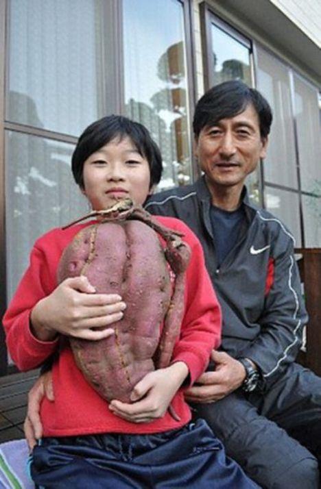 fukushima_obst_gemüse_verstrahlt_28